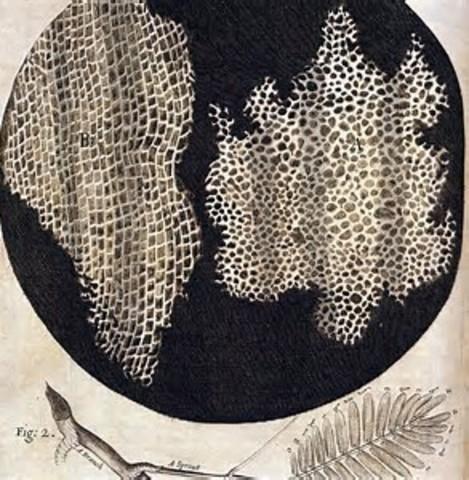 Corcho de Hooke