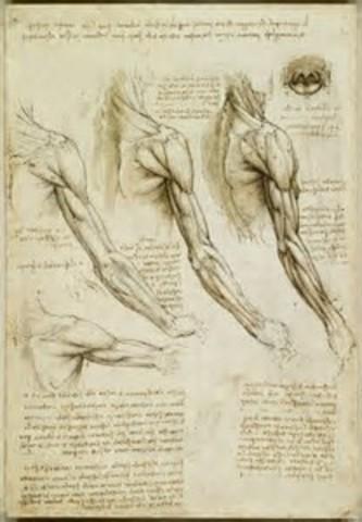 Los estudios de Leonardo