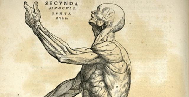 Renaissance - Anatomy