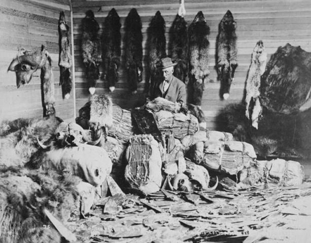 British Merchants Control The Fur Trade