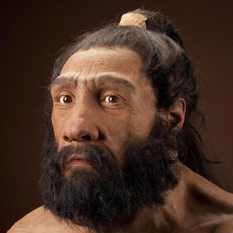 Homo neanderthalensis (150000aC)