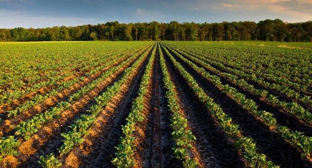 Landbouw in Nederland