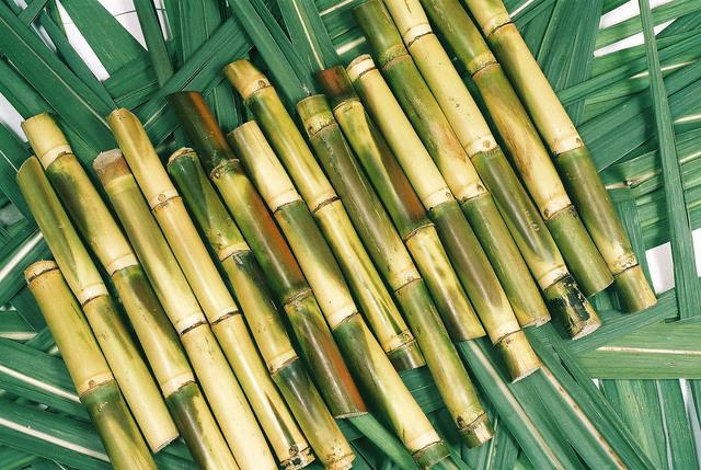 Sugar Cane First Cultivated in Brazil