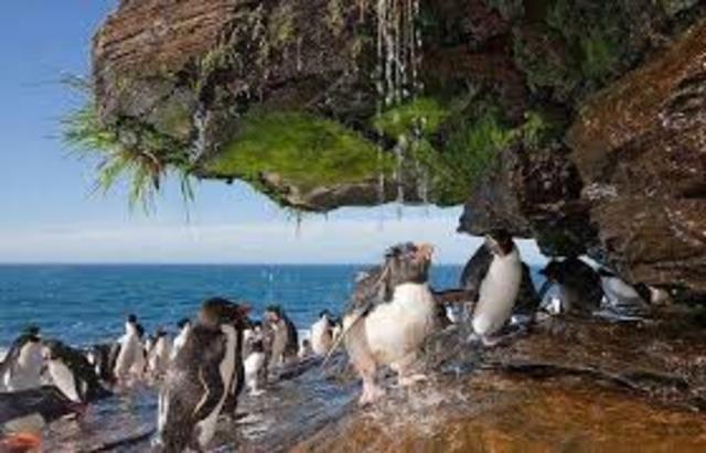 Фолклендские (Мальвинские) острова.     (Дж. Дейвис)