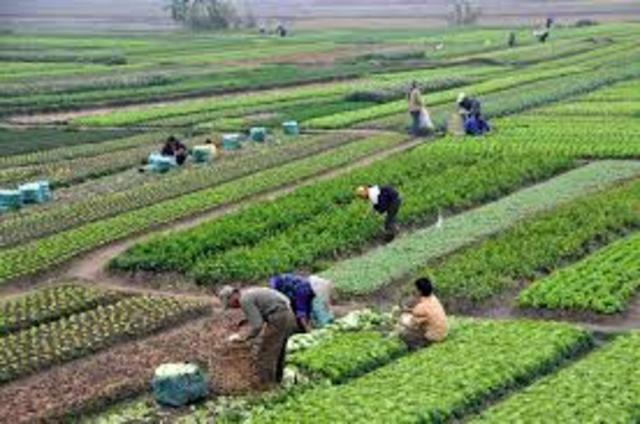 Agriculturism