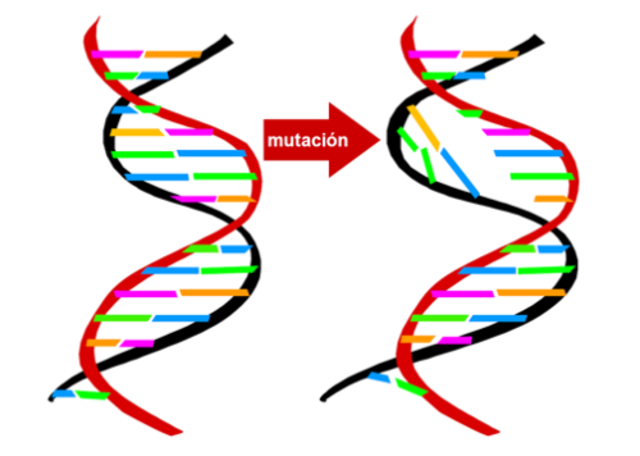 Teoria de la mutación