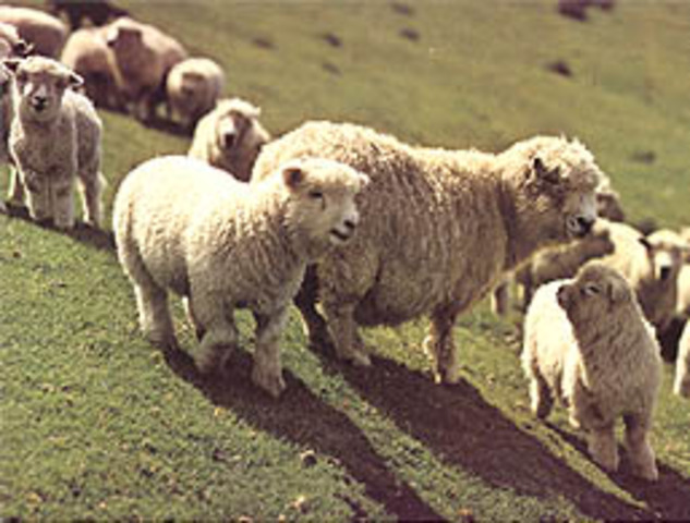 The Wool Act 1699