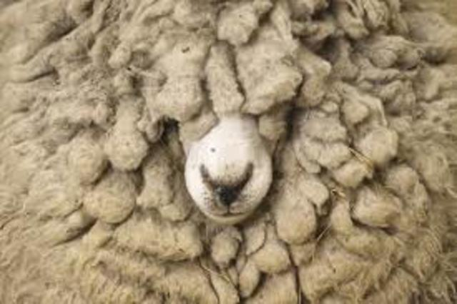 The Wool Act (p. 1)