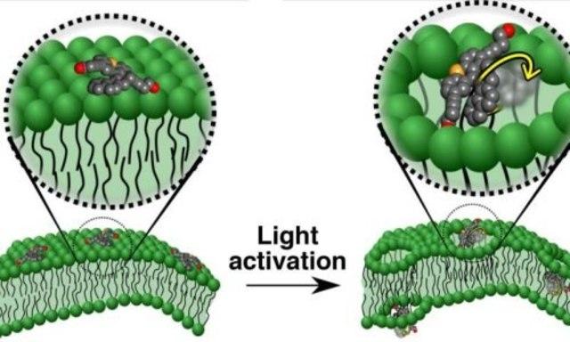 Созданы молекулярные наномашины, способные убивать раковые клетки.