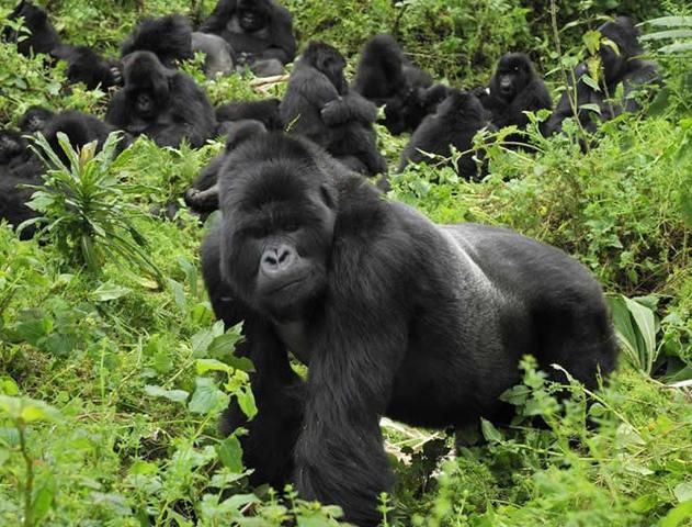 Dian Fossey's Death