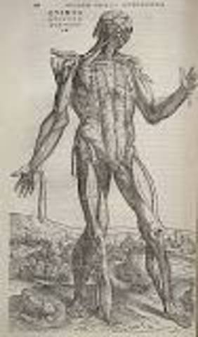 Andreas Vesalius published On the Fabric of the Human Body.