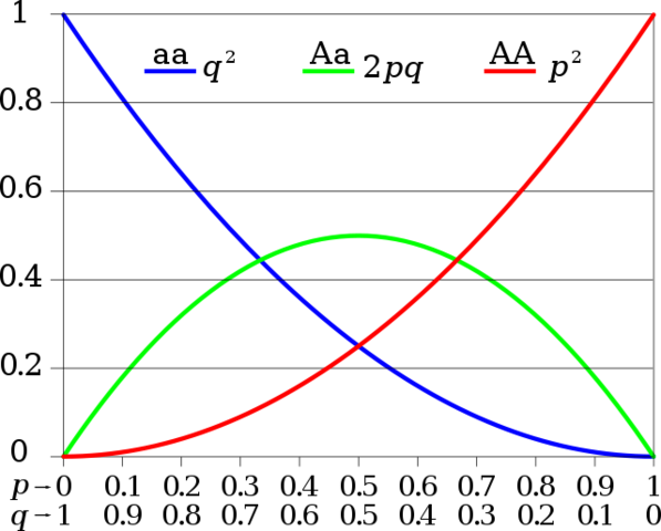 Hardy-Weinberg equation for determining allele frequencies