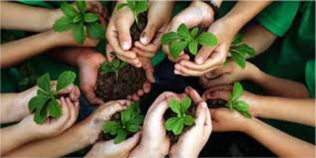 Programa Internacional de Educação Ambiental