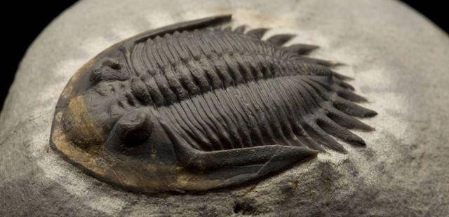 Extinción masiva del Pérmico-Triásico
