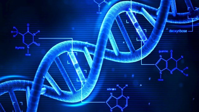 Avery, MacLoed and McCarty determine that DNA is the molecule that carries the genetic code