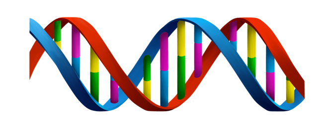 Human Genome Sequenced