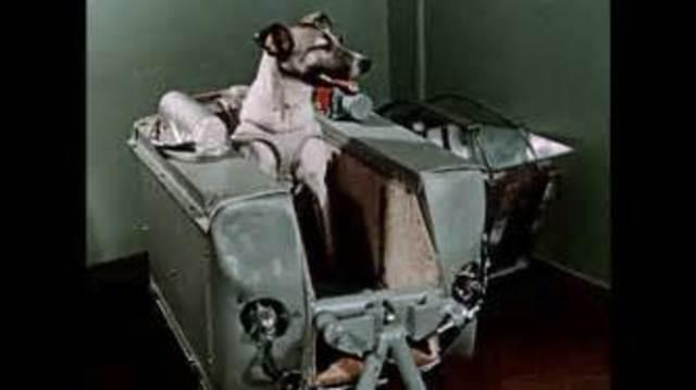 USSR Launches Sputnik 2