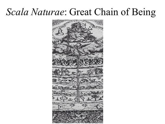 Aristotle describes life with the Scala Naturae