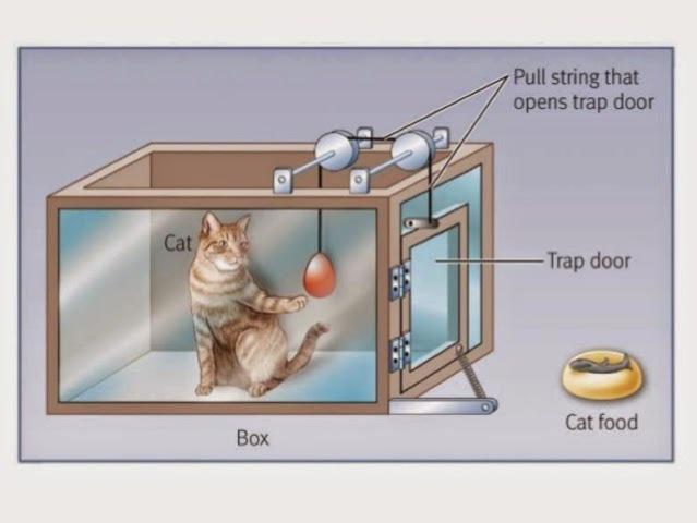 Edward Thorndike realiza experimentos con gatos, perros y gallinas.