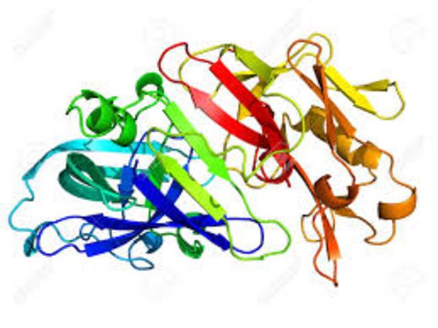 enzima pepsina