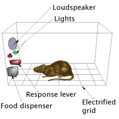 Skinner Box and Operant conditioning