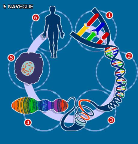 secuencia de genes