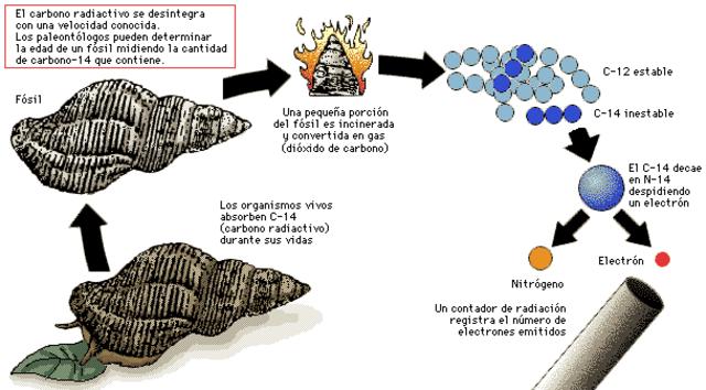 Se inventa la datación con carbono (carbono 14).