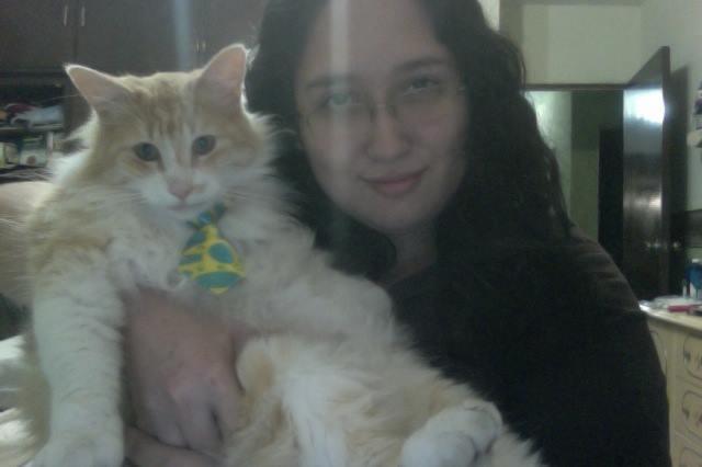Adopción gato Naranjon
