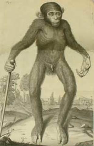 Tyson practica la diseccion a un chimpancé.