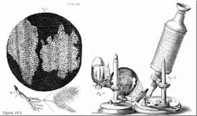 Se publican las primeras ilustraciones detalladas de insectos, obtenidas por Galileo utilizando un microscopio.