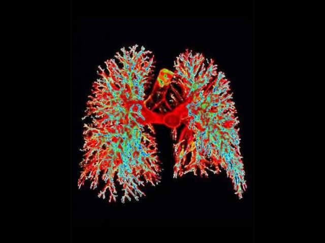 Malpighi y la red pulmonar