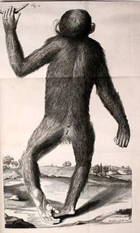 Edward Tyson: Orang-Outang, sive Homo Sylvestris