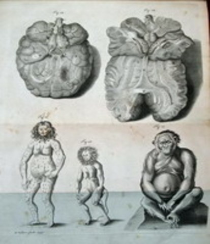 Tyson:Orang-Outang, sive Homo Sylvestris: or, the Anatomy of a Pygmie Compared with that of a Monkey