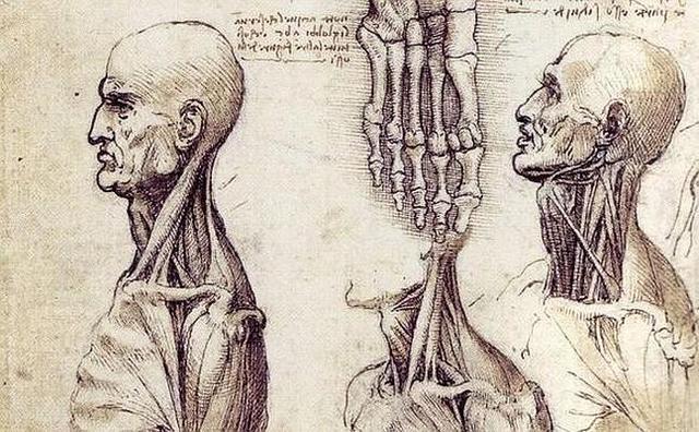 1490 Cuadernos de Anatomía Humana.