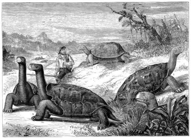 Charles Darwin estudia las islas Galápagos.