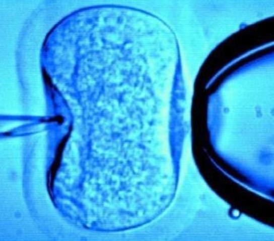 Georgi Frantsevich Gause comienza a experimentar in vitro.