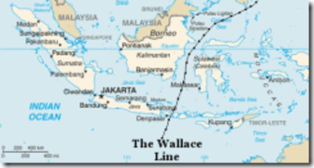 Alfred Russel Wallace realiza su segundo viaje rumbo al archipiélago mayor.