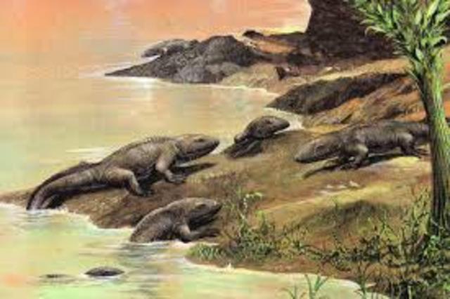 Anfibios, Primeros Animales Terrestres y Periodo Devónico