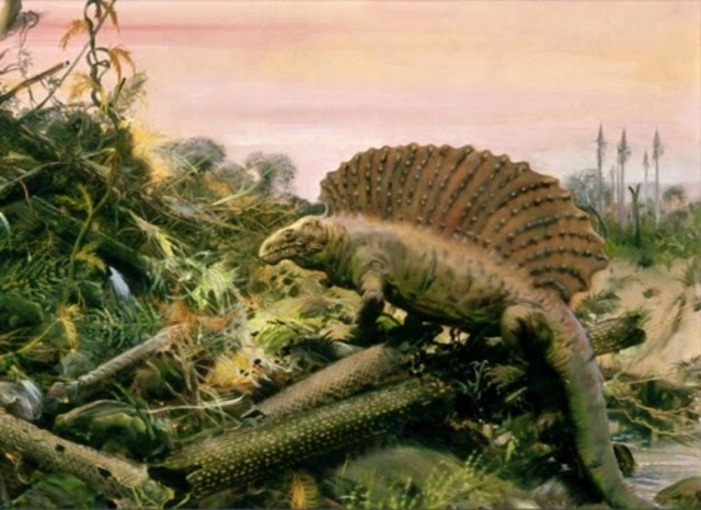 Evolución de Anfibios y Periodo Pérmico