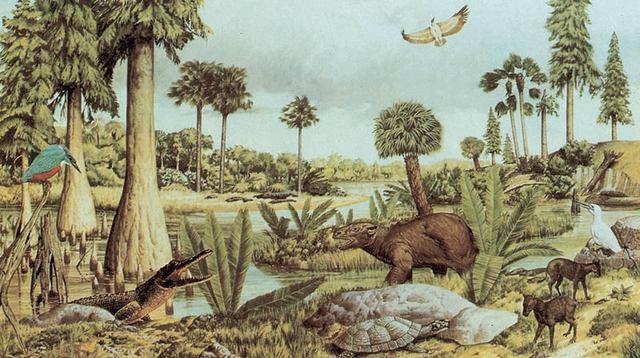 Evolución de los Mamíferos y Periodo Terciario