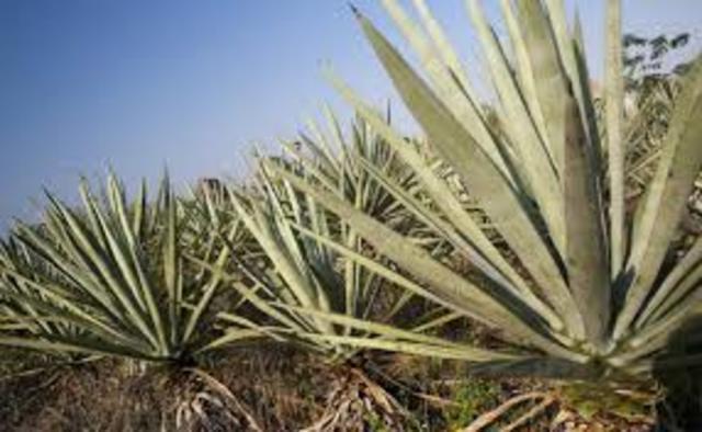 Ampliacion del mercado regional de Yucatan