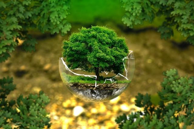Queda definitivamente establecido que la Ecología es una ciencia diferenciada de la Biología.