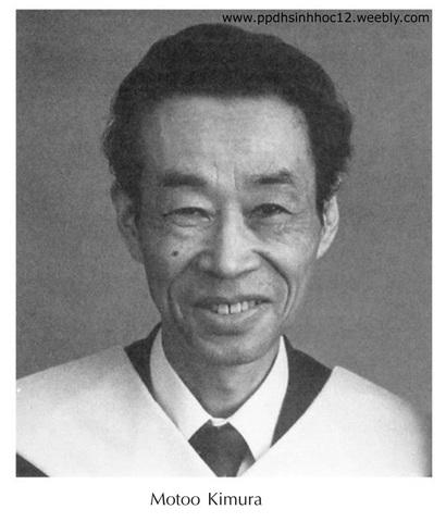 Kimura Motoo (1924-1994)