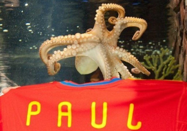 Brother Paul died octopus