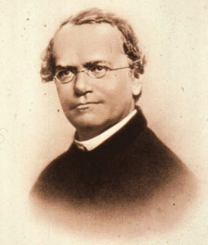Mendel (austriaco)
