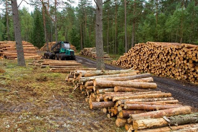 Ley general de desarrollo forestal sustentable (LGDFS)