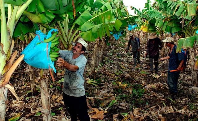 Convención Colectiva en Sector Bananero