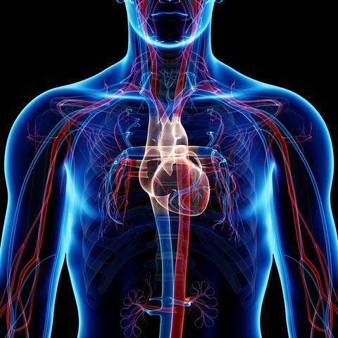 William Harvey explica el sistema circulatorio y la estructura del corazón en De motu cordis et sanguinis
