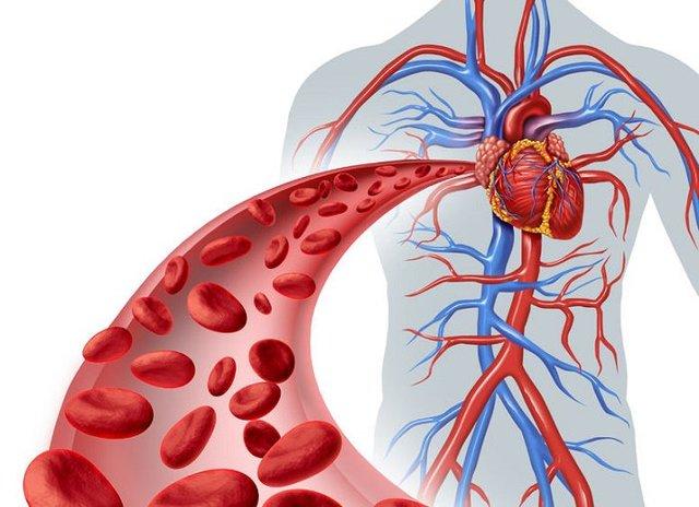 Circulación de la sangre - William Harvey