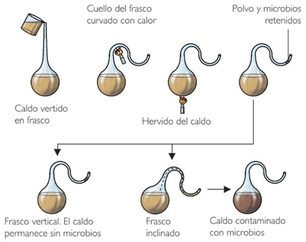 Experimento de Louis Pasteur (1822-1895)